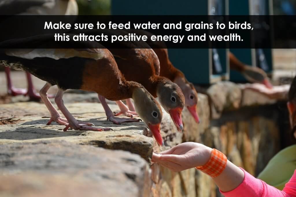 feeding birds for positivity
