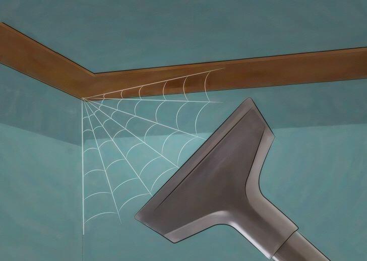 cobweb remove