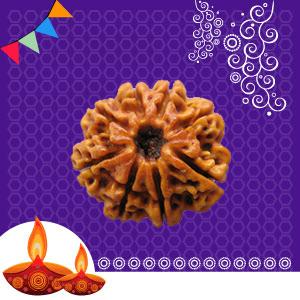 Buy 8 Mukhi Rudraksha online