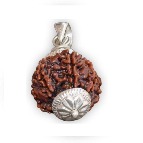 Certified 6 Face Rudraksha with Silver Cap