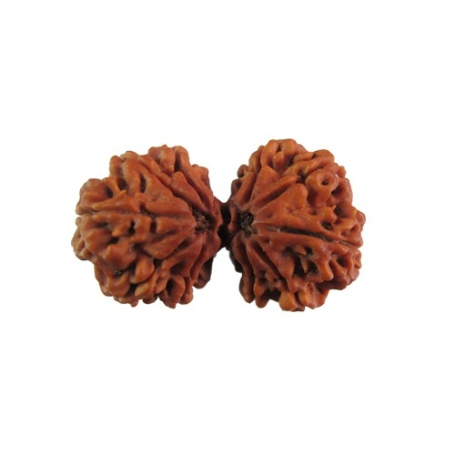 Rudraksha for Sexual Problems, Behavioral Disorders