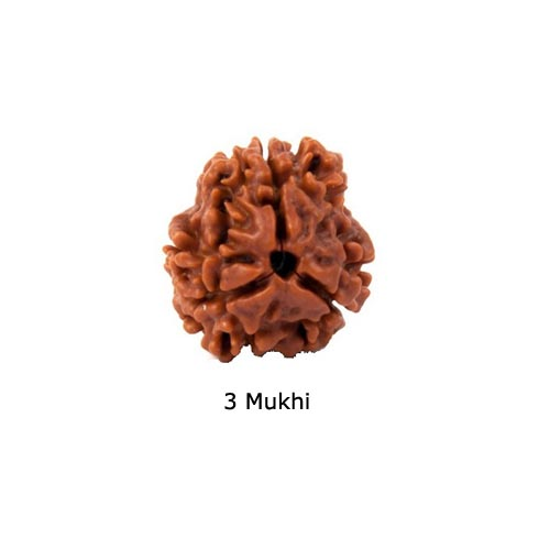 Rudraksha for Physically Weak, Lazy, Suffering From Cold Cough