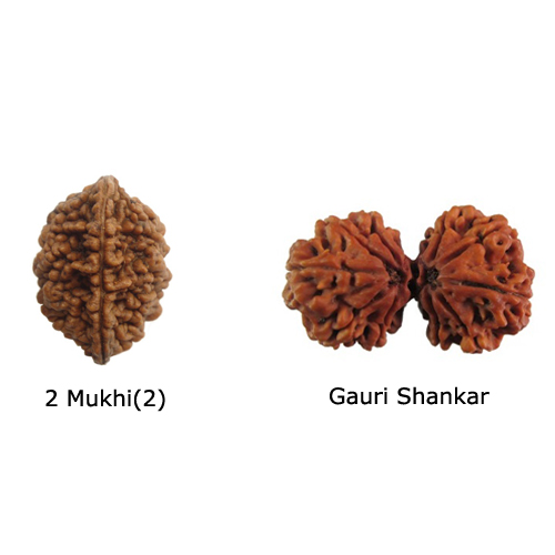 Rudraksha for Unity Of Family