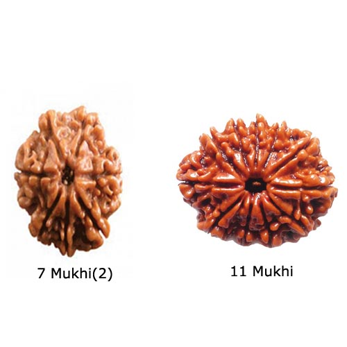 Rudraksha for Saturn Sade Sati Removal - Pendant