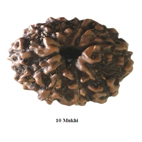 Rudraksha for Aries or Mesh