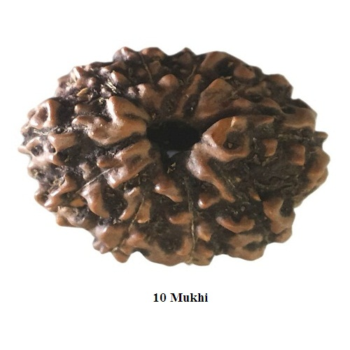 Rudraksha for Scorpio or Vrischik